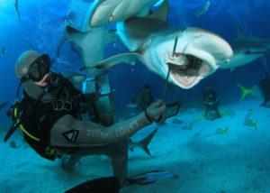 Free Diving in Bahamas